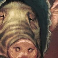 Piglady_dtl thumbnail